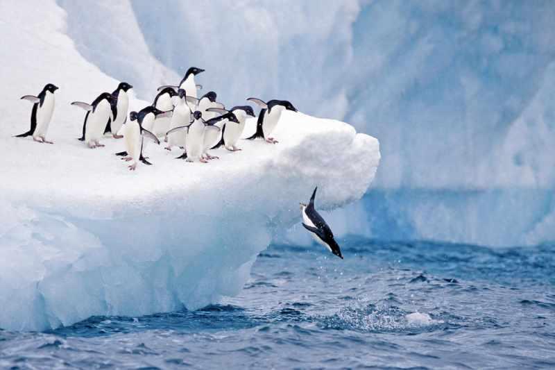ファーストペンギン仮想通貨